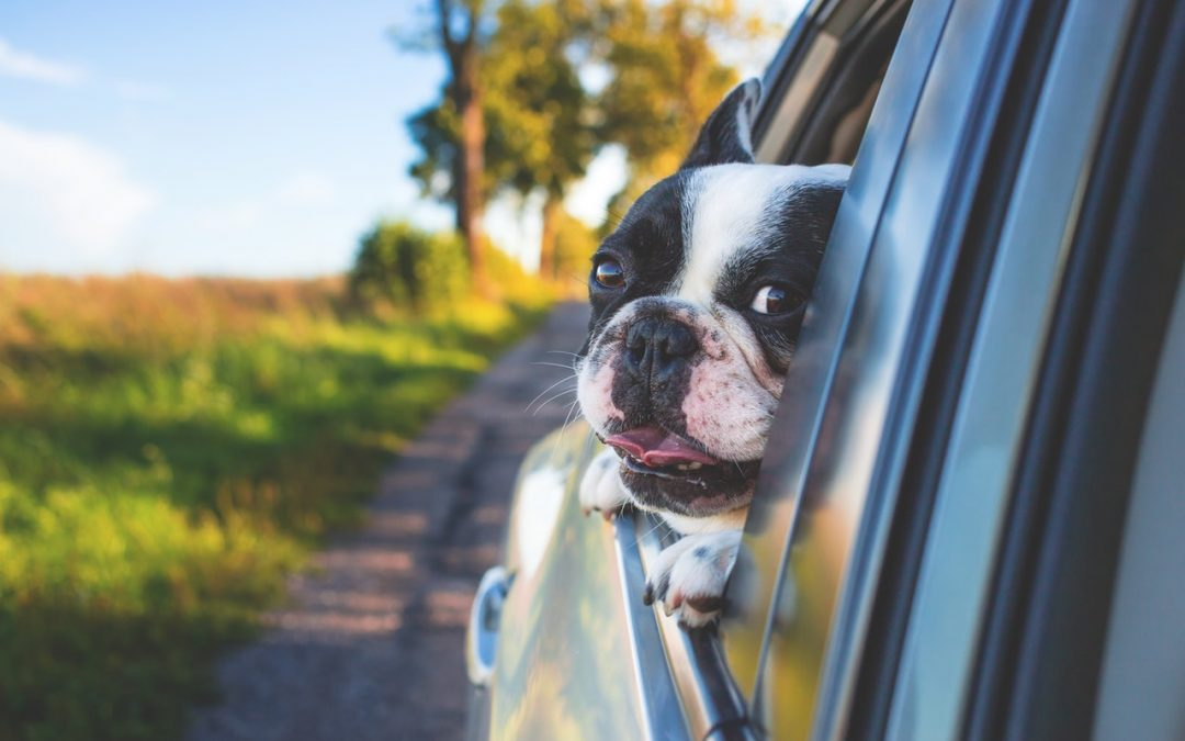 Budgeting for a New Dog: The Real Cost of Pet Ownership